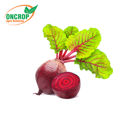 Oncrop Radish Seeds 15Gm