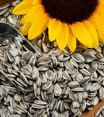 Sunflower Seeds 250gms