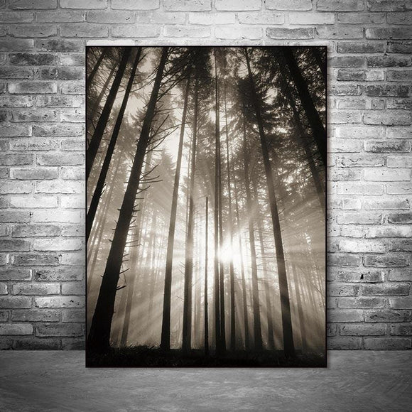 Sun And Forest Canvas Print