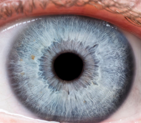 Iridology Assessment