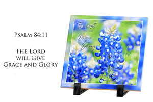 Bluebonnets / Psalm 84:11