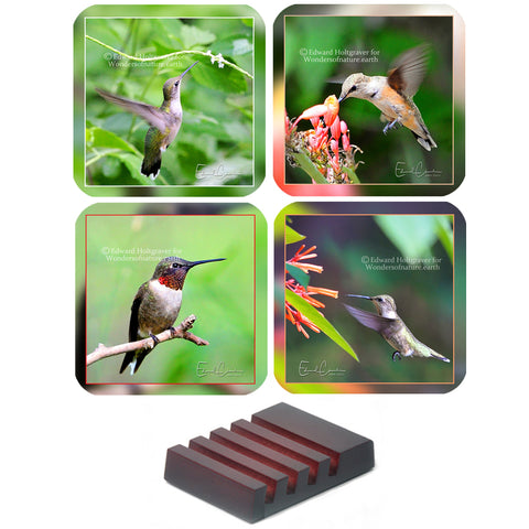 Hummingbird Set
