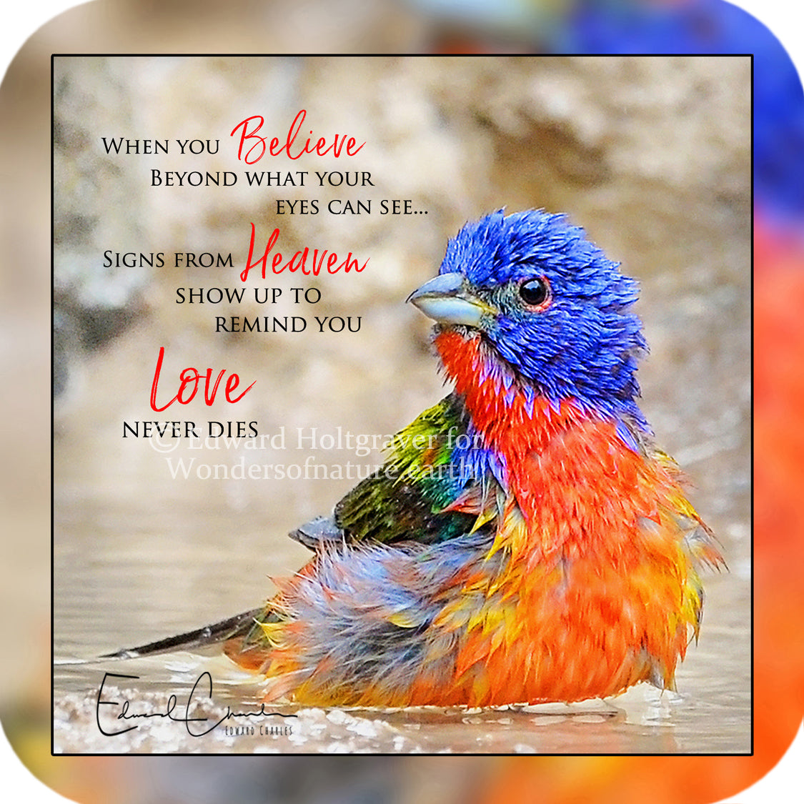Painted Bunting Poem