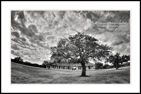 "Winter Tree at Fort McKavett, Texas 20"" x 30"""