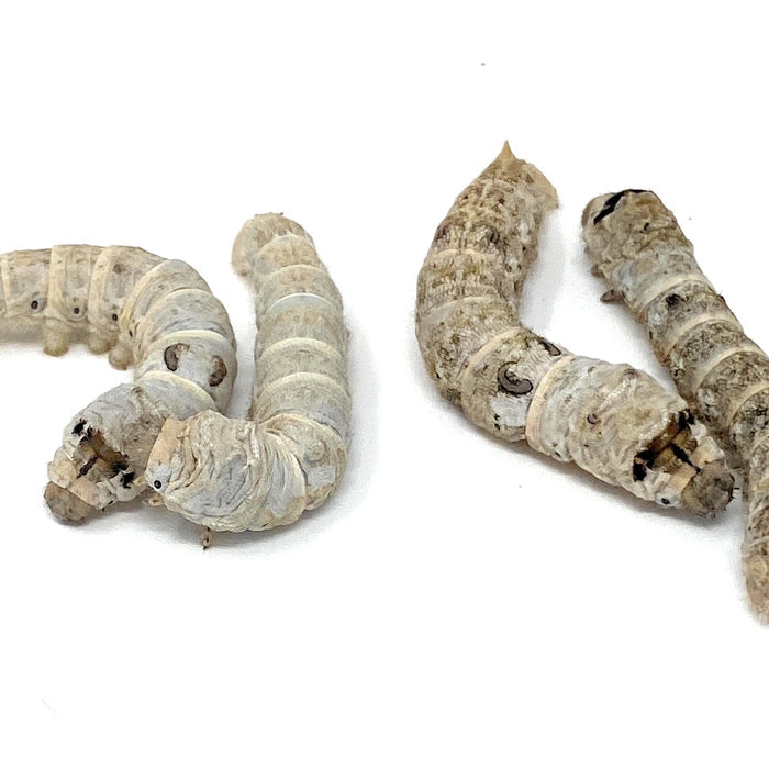 All About the Silkworm
