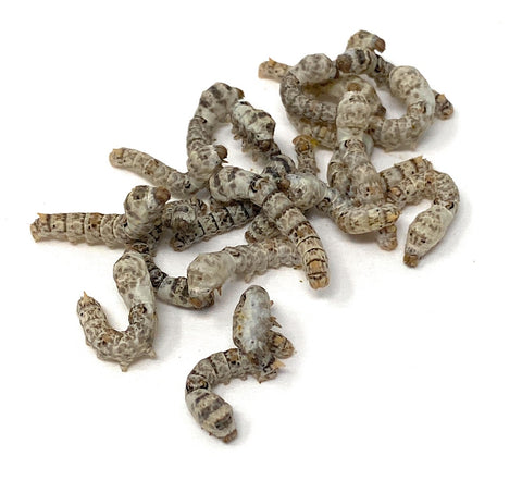 Live Silkworm Cup - 20ct