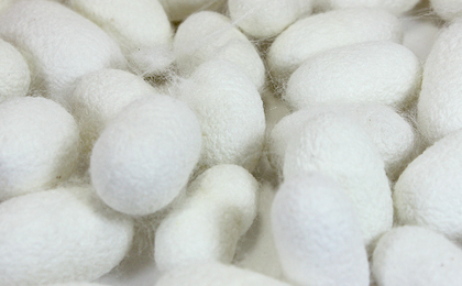 Used/Empty Silkworm Cocoons | FREE SHIPPING!!!