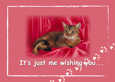 52363 Valentine's Day from Cat