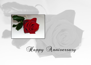 3626 Anniversary Red Rose