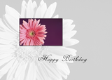 3625 Birthday Pink Daisy