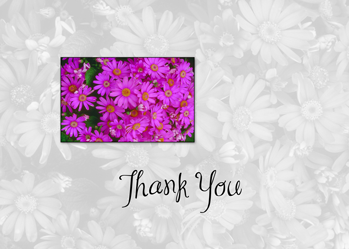 3629 Thank You Purple Daisy Field