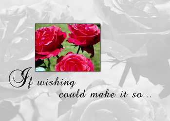 3808 Birthday Wishing Roses