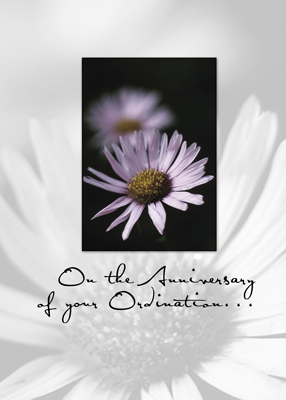3655 Ordination Anniversary Aster