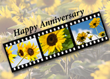 4031 Anniversary Sunflower Filmstrip