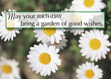 3969 Birthday Daisy Garden