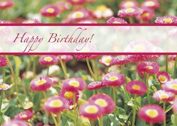 4127 Birthday Pink Flower Field