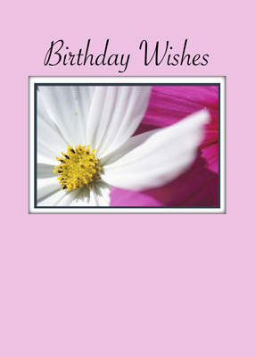 3782 Birthday Wishes Pink White Flower