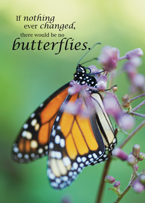 2752 Butterfly Changes