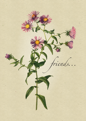 3377 Friend Thanks Pink Aster Religious