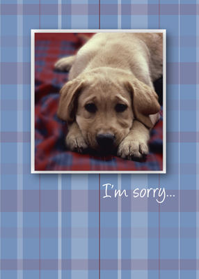 3756 I'm Sorry Puppy
