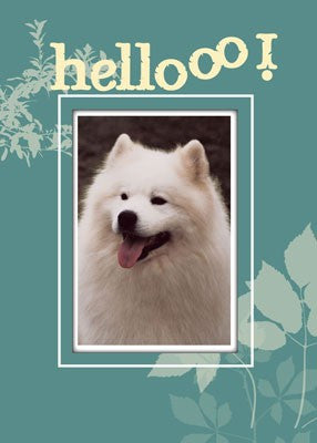 4374 Samoyed Dog Hello