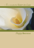 3318 Sister-in-Law Calla Lily Birthday