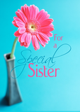 3548 Sister Valentine's Day Pink Daisy on Blue