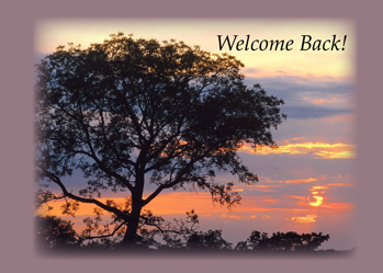 3748 Welcome Back Tree Sunset