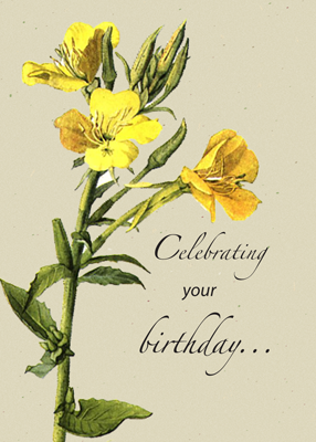2706 Yellow Primrose Birthday