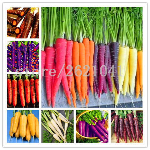 Colorful sweet carrot seeds 500pcs/bag