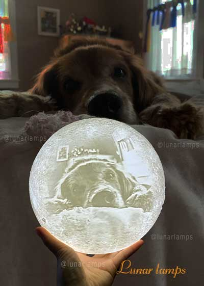 dog photo on the moon lamp