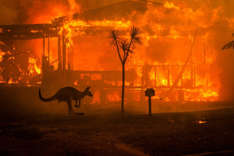 THANK YOU for your contribution to the Australian bushfire relief sale