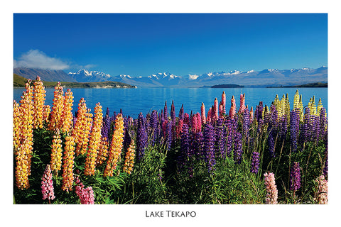 144 - Post Art Postcard - Wild Lupins