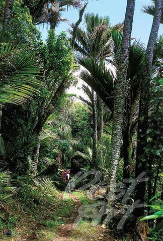 168 - Post Art Postcard - Nikau, Heaphy Track
