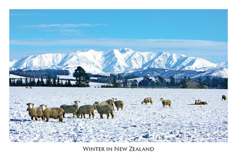 203 - Post Art Postcard - Canterbury Sheep in Snow