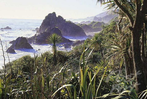 27 - Paparoa, West Coast