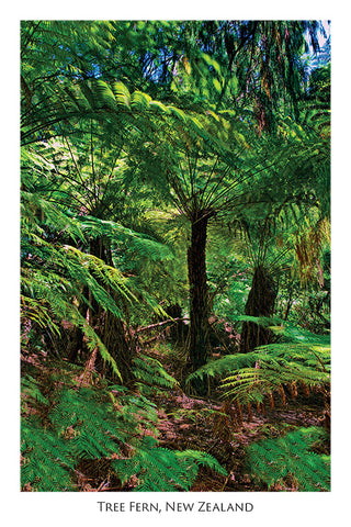 30 - Post Art Postcard - Tree Fern
