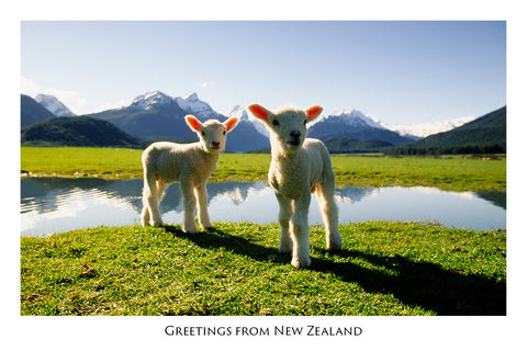 502 - Post Art Postcard - Postcard - Cute Lambs