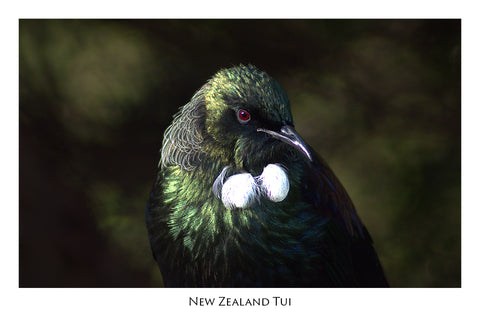 504 - Post Art Postcard - Postcard - Tui