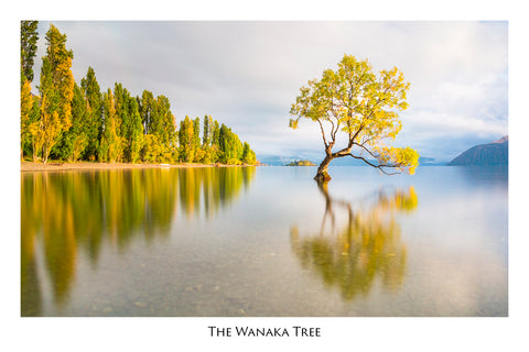 518 - Post Art Postcard - The Wanaka Tree