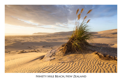 619 - Post Art Postcard - Ninety Mile Beach