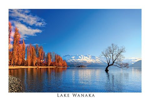 65 - Post Art Postcard - Lake Wanaka Autumn