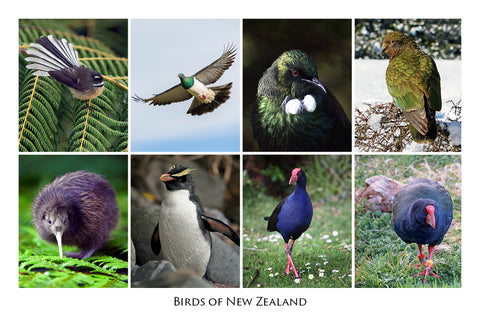 692 - Post Art Postcard - Birds of New Zealand