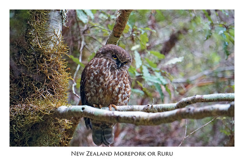 699 - Post Art Postcard - Morepork or Ruru
