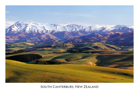 716 - Post Art Postcard - South Canterbury Farmland