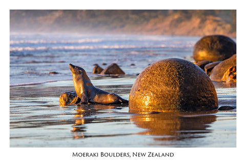 722 - Post Art Postcard - Moeraki Boulders and Seal.jpg