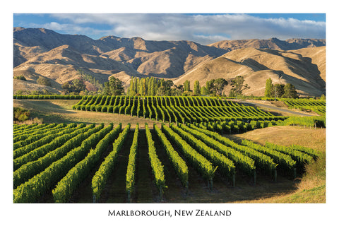 746 - Post Art Postcard - Marlborough Vineyards