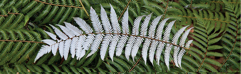 BM114 - Post Art Bookmark - The Silver Fern