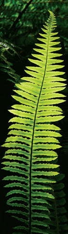 BM1003 - Sisson Bookmark - Fern