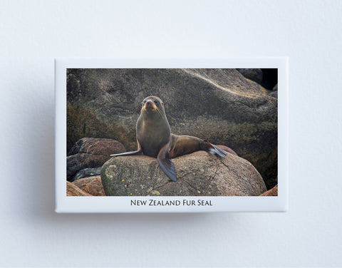 FM0029 - Fridge Magnet - Fur Seal